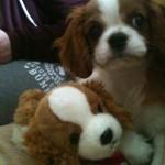 Ben & Teddy