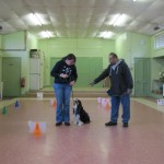 First Cavalier Rally Obedience session
