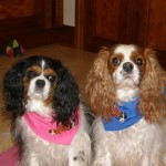 Molly and Dougall with their Bandanas