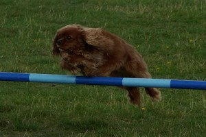 Ruby takes an agility jump