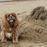 Blossie on the beach
