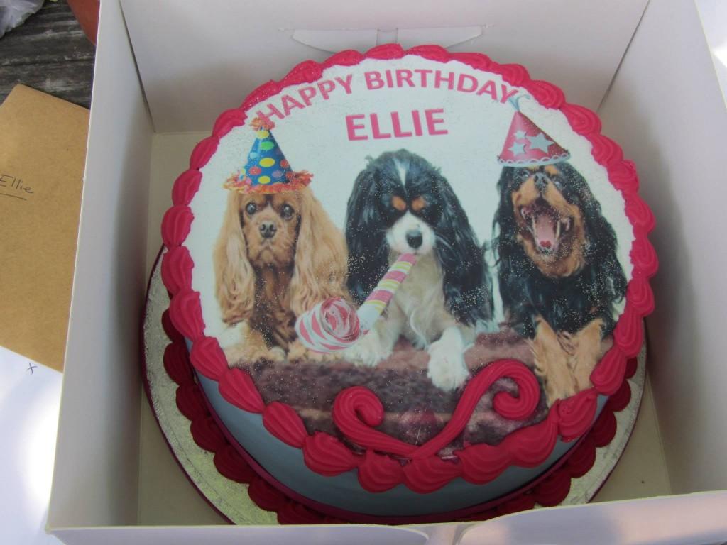 ... up birthday cake  The Companion Cavalier King Charles Spaniel Club