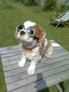 Flossie Wearing Her Doggles