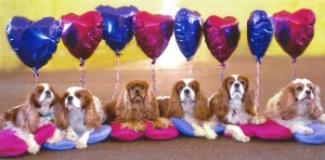CC Team with Balloons