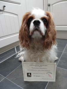 Lola with certificate