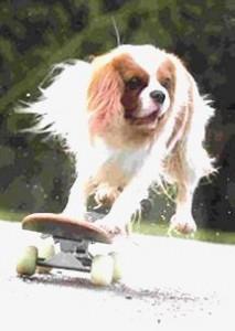CC Team skateboarding